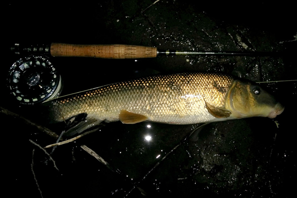I caught this Sucker after dislodging a snag at the bottom of a nice deep pool.