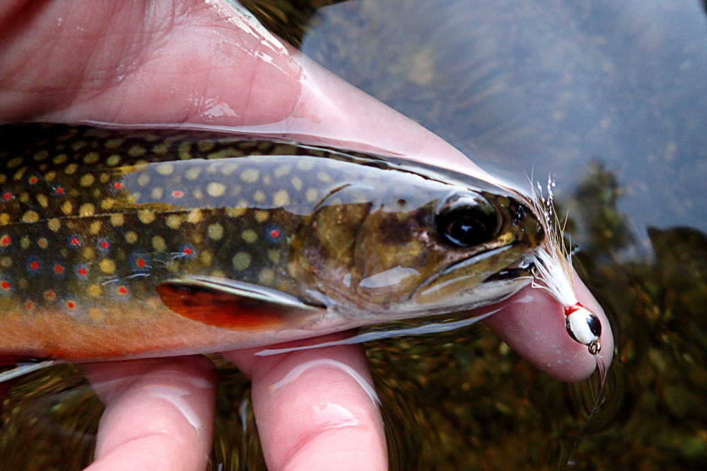 Brookies of all sizes liked this little Thunder Creek Streamer