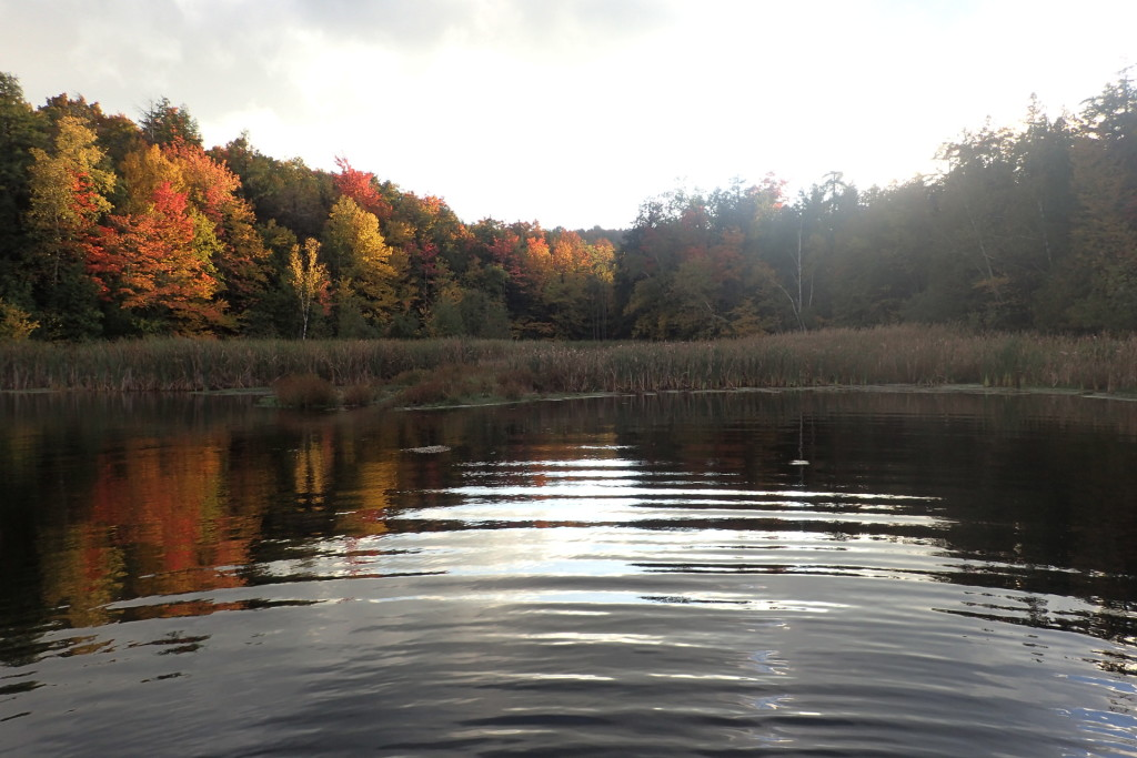 Stillwater fly fishing in the fall is about as peaceful as it gets.