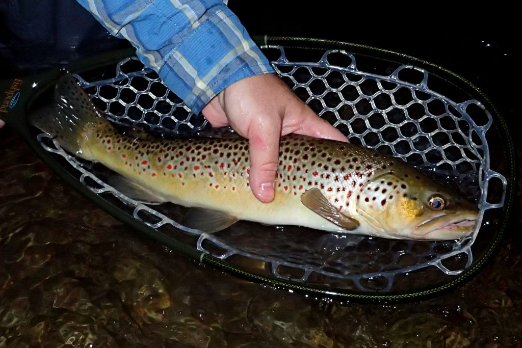 A hard-earned Brown Trout caught after a couple hours of night fishing with my friend Ryan.