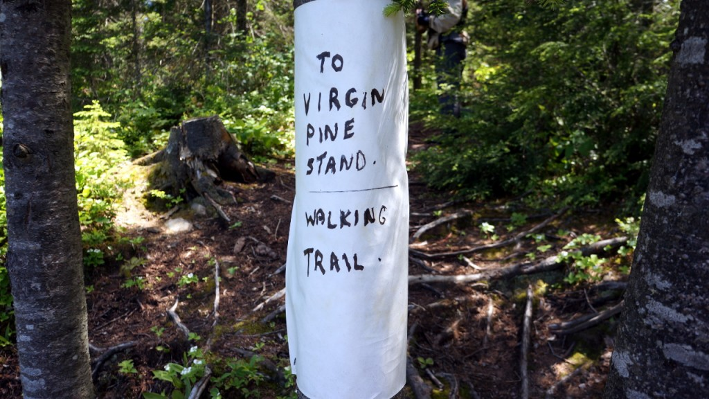 Marking for trail leading to one of the last remaining virgin white pine stands in Algonquin