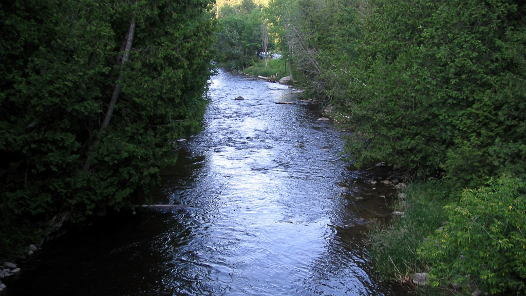 Looking downstream on the main branch of the Forks of the Credit River