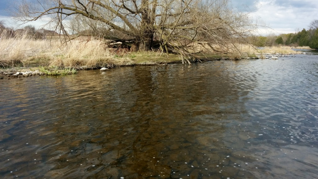 Abnormally clear, low water on the Grand River.