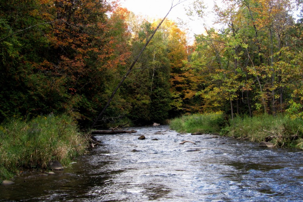 A peaceful stretch of water on the Upper Credit River