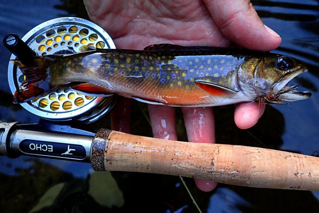 Colorful small stream brook trout caught on a new budget Echo Carbon 2wt rod.